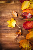 Colección de hojas de otoño en fondo de madera Fotografía de archivo libre de regalías