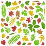 Colección de hojas del verde y de otoño Fotografía de archivo libre de regalías