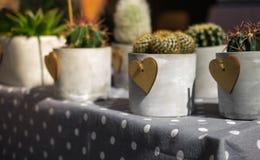 colección de houseplants con el corazón de madera en la etiqueta del lunar Imagenes de archivo