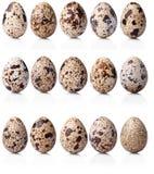 Colección de huevos de codornices Foto de archivo libre de regalías