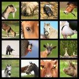 Colección de imágenes de los animales del campo fotografía de archivo libre de regalías