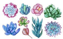 Colección de la acuarela con las plantas de los succulents ilustración del vector