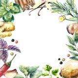 Colección de la acuarela de hierbas y de especias frescas Imagenes de archivo