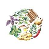 Colección de la acuarela de hierbas y de especias frescas Fotografía de archivo libre de regalías