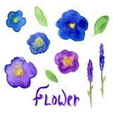 Colección de la acuarela de la lavanda y de la viola Flores violetas fijadas Ejemplo dibujado mano del vector para la invitación Foto de archivo libre de regalías