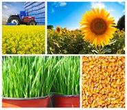 Colección de la agricultura Fotografía de archivo