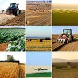 Colección de la agricultura Imagen de archivo libre de regalías