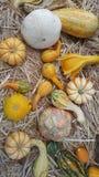 Colección de la calabaza Foto de archivo libre de regalías