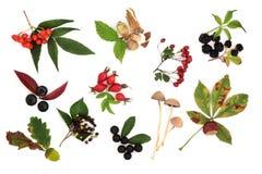 Colección de la cosecha del otoño Fotos de archivo