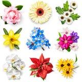 Colección de la flor Fotos de archivo libres de regalías