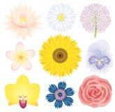 Colección de la flor de Beautilful Imagenes de archivo