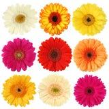 Colección de la flor de la margarita Imágenes de archivo libres de regalías