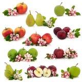 Colección de la fruta Imagen de archivo