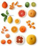 Colección de la fruta cítrica Imagen de archivo