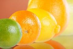 Colección de la fruta cítrica Foto de archivo