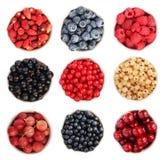 Colección de la fruta del verano Fotografía de archivo libre de regalías