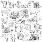 Colección de la granja - sistema dibujado mano Imagenes de archivo