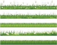 Colección de la hierba verde stock de ilustración