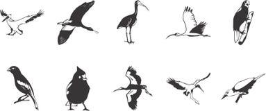Colección de la ilustración del pájaro Imagen de archivo libre de regalías