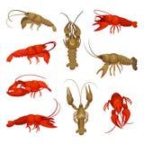Colección de la langosta en el fondo blanco Concepto crustáceo ilustración del vector