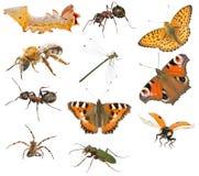 Colección de la macro del insecto Imagen de archivo libre de regalías