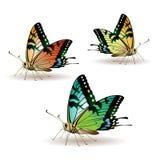 Colección de la mariposa Fotografía de archivo