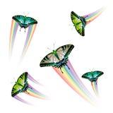 Colección de la mariposa Imágenes de archivo libres de regalías