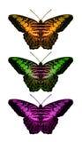 Colección de la mariposa stock de ilustración