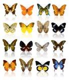 Colección de la mariposa ilustración del vector
