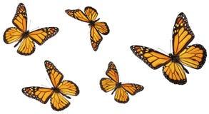 Colección de la mariposa de monarca Foto de archivo libre de regalías