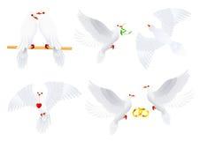 Colección de la paloma stock de ilustración