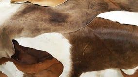 Colección de la selección/acción de cuero del cuero para el cliente en la fase de diseño de fabricación de la materia textil Foto de archivo