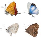 Colección de la vista lateral de la mariposa Imágenes de archivo libres de regalías