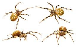 Colección de las arañas Foto de archivo libre de regalías