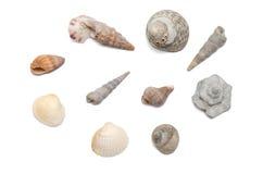 Colección de las conchas marinas Imagenes de archivo