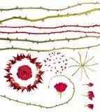 Colección de las espinas de Rose Imagen de archivo
