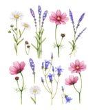 Colección de las flores salvajes stock de ilustración