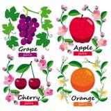 Colección de las frutas y de las flores Fotos de archivo