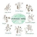 Colección de las hierbas de Ayurvedic Fotos de archivo libres de regalías