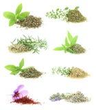 Colección de las hierbas y de las especias imagenes de archivo