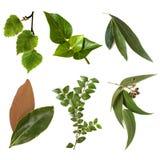 Colección de las hojas aislada en blanco Foto de archivo