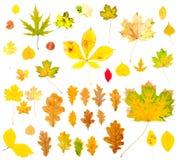 Colección de las hojas de otoño Fotos de archivo libres de regalías