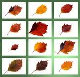 Colección de las hojas de otoño Imágenes de archivo libres de regalías
