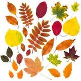 Colección de las hojas de otoño aislada Fotografía de archivo libre de regalías
