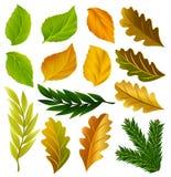 Colección de las hojas del verano y de otoño del vector