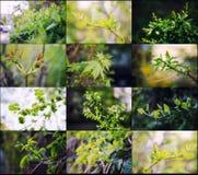 Colección de las hojas y de los brotes Foto de archivo libre de regalías