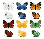 Colección de las mariposas Fotos de archivo libres de regalías