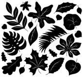 Colección 1 de las siluetas de las hojas Foto de archivo libre de regalías