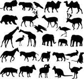 Colección de las siluetas de los animales Fotografía de archivo libre de regalías