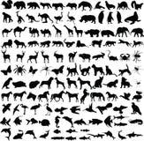 Colección de las siluetas de los animales Fotografía de archivo